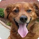 Adopt A Pet :: Ceaser