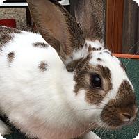 Adopt A Pet :: Cookie Dough - St Helena, CA