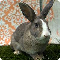 Adopt A Pet :: Genie - San Diego, CA