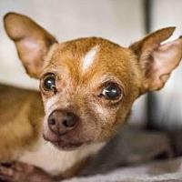 Chihuahua Mix Dog for adoption in Decatur, Georgia - Felecia-Adopted