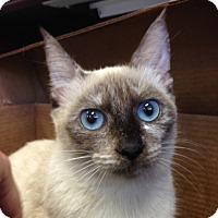 Adopt A Pet :: Pandora - Savannah, GA