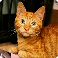 Adopt A Pet :: Punkin - Los Angeles, CA