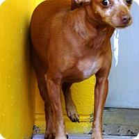 Adopt A Pet :: Little Girl - Redding, CA