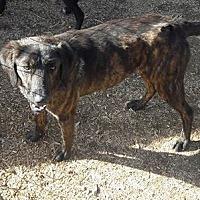 Adopt A Pet :: Ally - Staunton, VA