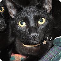 Adopt A Pet :: Charlie (#1) - Garland, TX