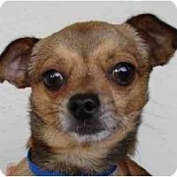 Adopt A Pet :: Tyson - San Francisco, CA