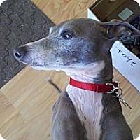 Adopt A Pet :: Kody - Costa Mesa, CA