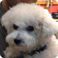 Adopt A Pet :: Luna - La Costa, CA
