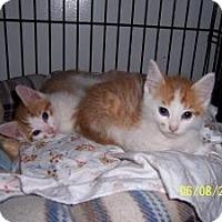 Adopt A Pet :: Yogi & Rambo - Island Park, NY