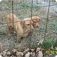 Adopt A Pet :: Epic - Wakefield, RI