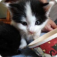 Adopt A Pet :: Olaf - Florence, KY