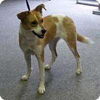Adopt A Pet :: Mia - Conroe, TX
