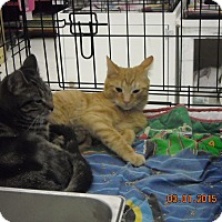 Adopt A Pet :: Paxton (and/or  Percy) - Riverside, RI