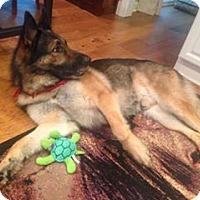 Adopt A Pet :: Rex - Roswell, GA