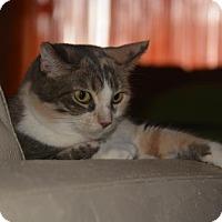 Adopt A Pet :: Nakessa Goldilocks - Glendale, AZ