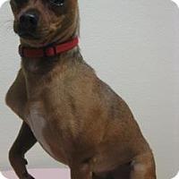 Adopt A Pet :: Bruzzer - Gary, IN