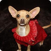 Adopt A Pet :: Betsy - Henderson, NV