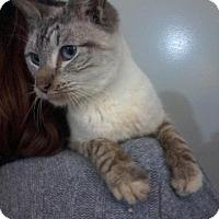 Adopt A Pet :: Violet-Special Story! - Arlington, VA