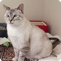 Adopt A Pet :: Friskies (Cocoa Center) - Cocoa, FL
