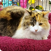 Adopt A Pet :: Princess - Castro Valley, CA