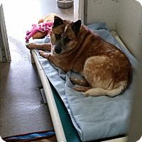 Adopt A Pet :: Toby - Chippewa Falls, WI