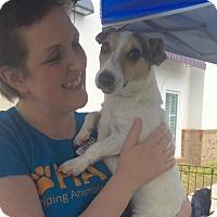 Adopt A Pet :: Jordan - Lincolnton, NC