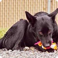 Adopt A Pet :: Sadie - Lincolnton, NC