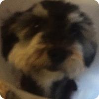 Adopt A Pet :: Sammy - Thousand Oaks, CA