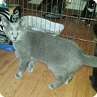Adopt A Pet :: Matthew - Delmont, PA