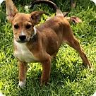 Adopt A Pet :: Lane