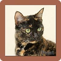 Adopt A Pet :: Pepsi - Aiken, SC