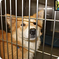 Australian Shepherd Mix Dog for adoption in Providence, Rhode Island - Elvis