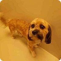Adopt A Pet :: ALEX - Upper Marlboro, MD