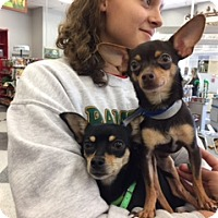 Adopt A Pet :: Cocco and Hallie - Valley Center, CA
