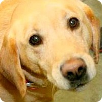 Adopt A Pet :: HARLEY(WHAT A STORY! PLS READ! - Wakefield, RI