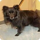 Adopt A Pet :: THOMAS