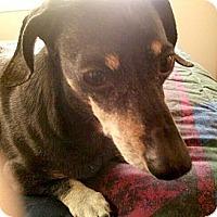 Adopt A Pet :: FRANKIE - Portland, OR