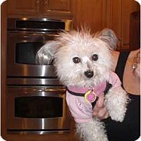 Adopt A Pet :: Starla - Rescue, CA