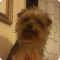 Adopt A Pet :: Trixie - Hazard, KY