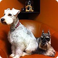 Adopt A Pet :: Zoe - Vaudreuil-Dorion, QC