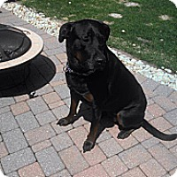 Adopt A Pet :: Bella - Oak Brook, IL