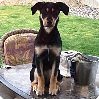 Adopt A Pet :: Bella - Kirkland, WA