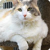 Adopt A Pet :: Cali - Dublin, CA