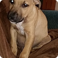 Adopt A Pet :: Guinness - North Olmsted, OH