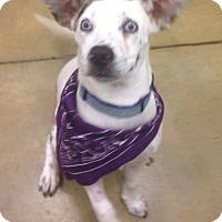 Adopt A Pet :: Cassie - Gainesville, FL