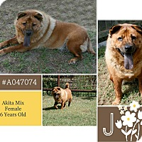 Adopt A Pet :: Jun - Lufkin, TX