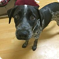 Adopt A Pet :: Neptune in CT - East Hartford, CT