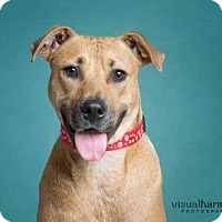 Adopt A Pet :: Buttercup - Phoenix, AZ