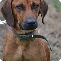 Adopt A Pet :: Rudy - Albemarle, NC