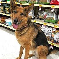German Shepherd Dog Dog for adoption in West Richland, Washington - Sunkist